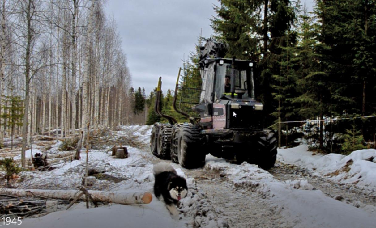 Ylemmässä kuvassa Timo Ikäheimo ajaa kaato motoa, alemmassa kuvassa Tatu Pekkarinen ajaa ajokonetta ja puu kulkee.